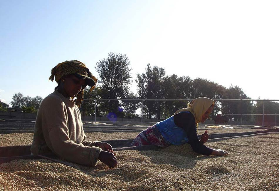 Salcher Kaffee: Tanzania