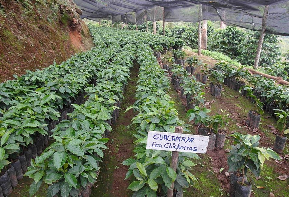Salcher Kaffee Tanzania
